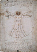 The proportions of the human body in the manner of Vitruvius (The Vitruvian Man)