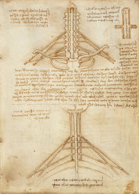 Diagrammatic drawing of the brachial plexus The Royal Collection © 2005, Her  Majesty Queen Elizabeth II